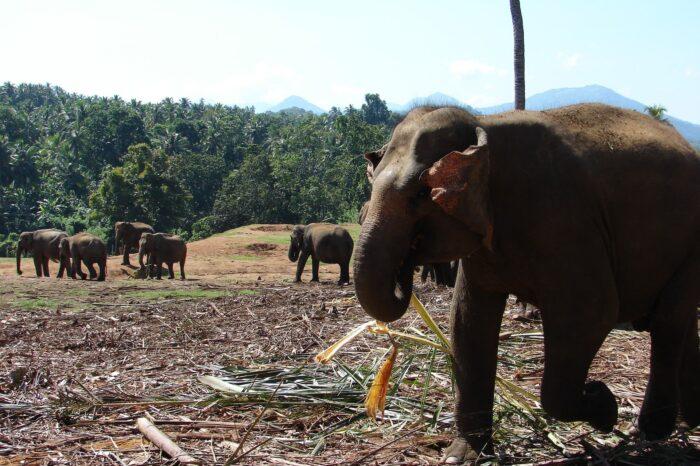 Sri Lanka Diverse Tour