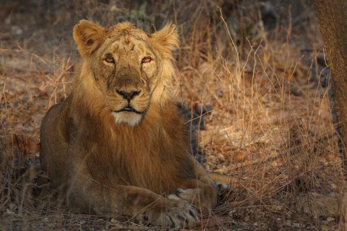 Gujarat Wildlife Tour